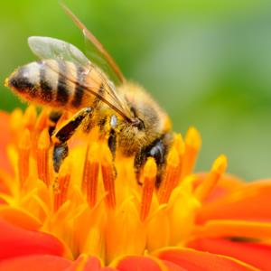 Honey Temecula